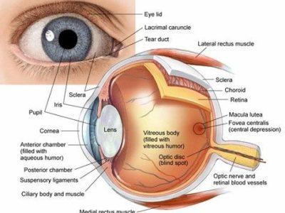 Laser Eye Surgery (LASIK) Procedure Description
