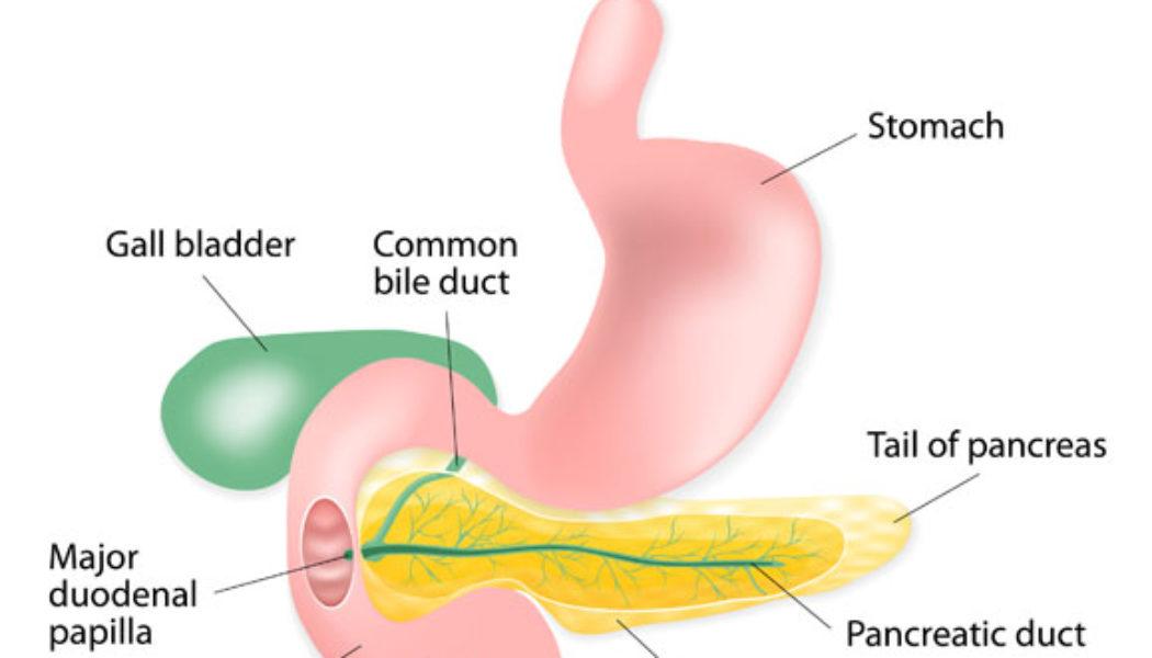 Pancreatectomy Procedure Description
