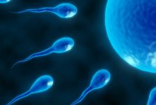 In Vitro Fertilization (IVF) FAQ