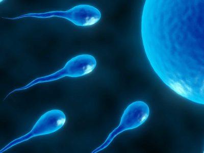 In Vitro Fertilization (IVF) FAQ